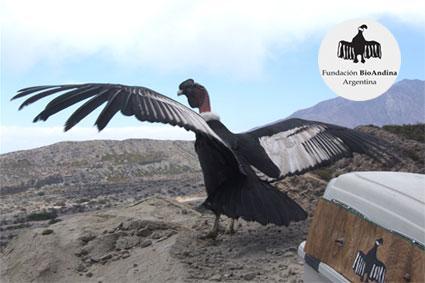 Bioparc-parc-zoologique-projet-nature-condor-1