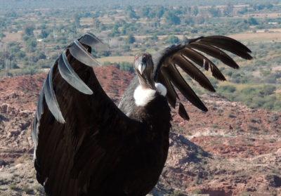 Bioparc-parc-zoologique-projet-nature-condor-slider