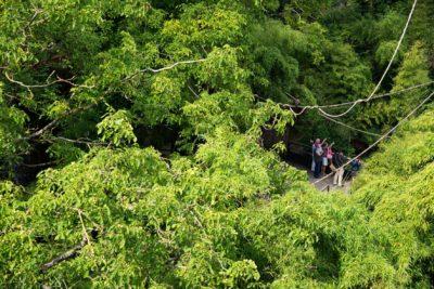bioparc-parc-zoologique-bambous-sanctuaire-okapis