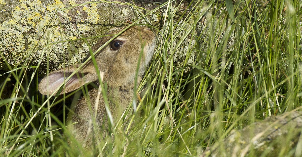 bioparc parc zoologique lapin