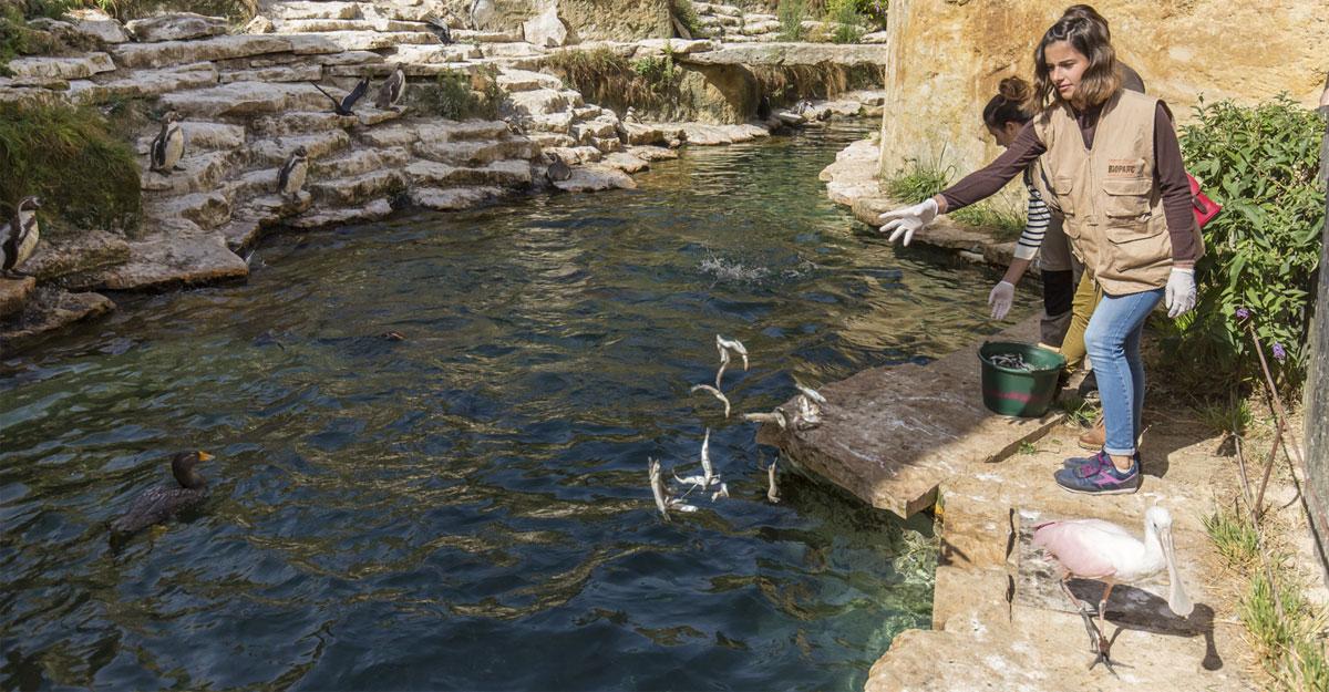bioparc parc zoologique nourrissage animaux