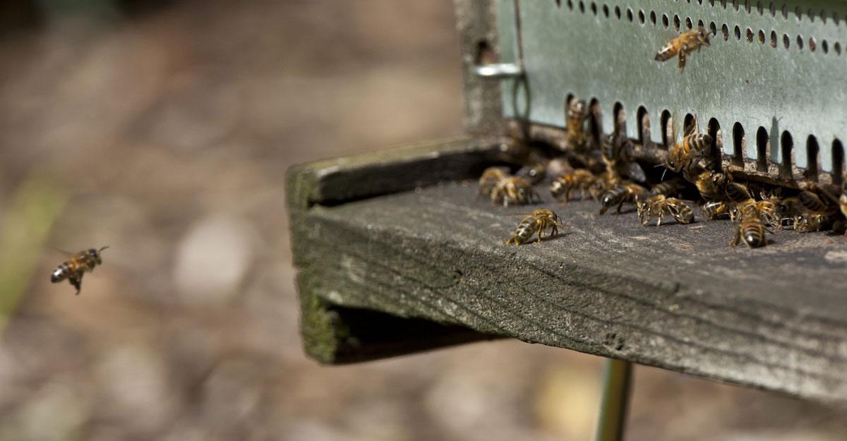 bioparc parc zoologique ruche abeilles