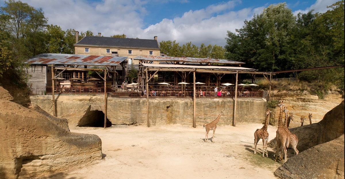 bioparc-parc-zoologique-restaurant-face-girafes