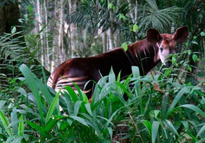 Bioparc-parc-zoologique-projet-nature-okapi-slider
