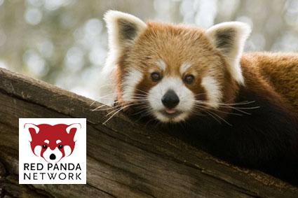 Bioparc-parc-zoologique-projet-nature-panda-2