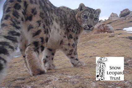 Bioparc-parc-zoologique-projet-nature-panthere-1bis
