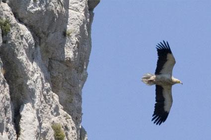 Bioparc-parc-zoologique-projet-nature-percnoptere-3