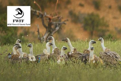 Bioparc-parc-zoologique-projet-nature-vautour_bulgarie-1