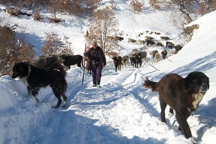 Bioparc-parc-zoologique-projet-nature-vautour_bulgarie-3