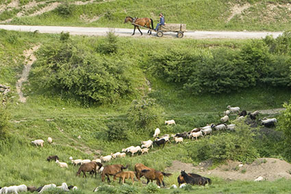 Bioparc-parc-zoologique-projet-nature-vautour_bulgarie-4