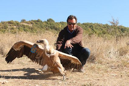 Bioparc-parc-zoologique-projet-nature-vautour_bulgarie-6