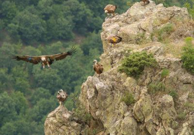 Bioparc-parc-zoologique-projet-nature-vautour_bulgarie