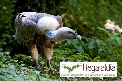 Bioparc-parc-zoologique-projet-nature-vautour-france-2