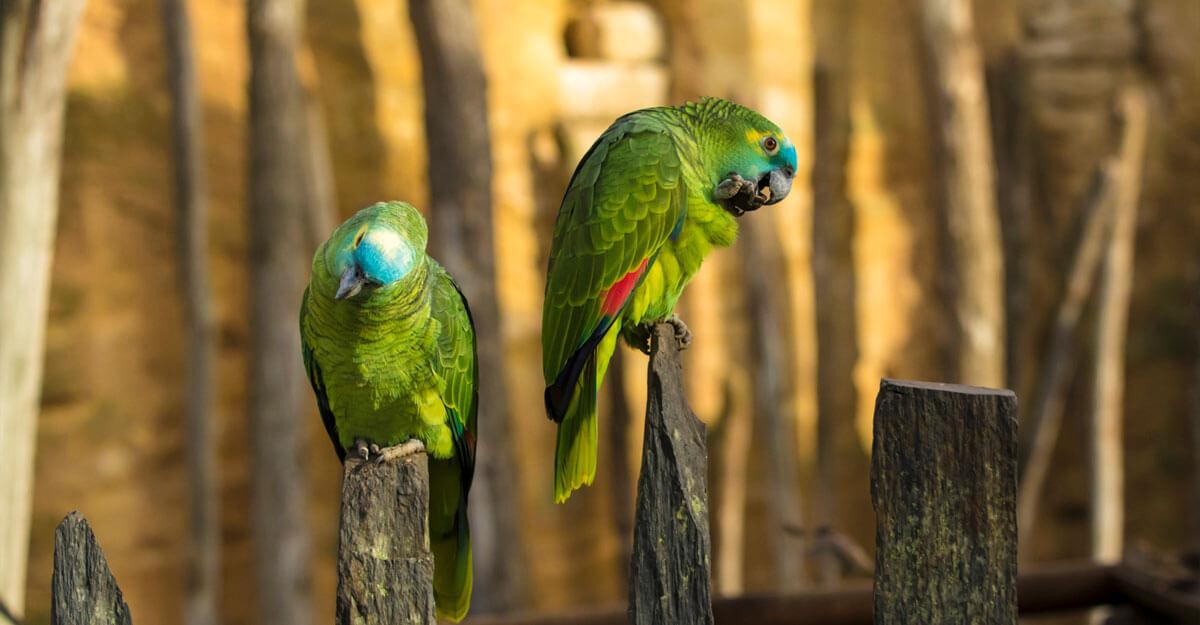 bioparc-parc-zoologique-amazone-front-bleu