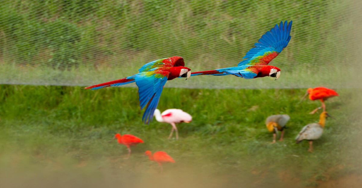 bioparc-parc-zoologique-ara-ailes-vertes
