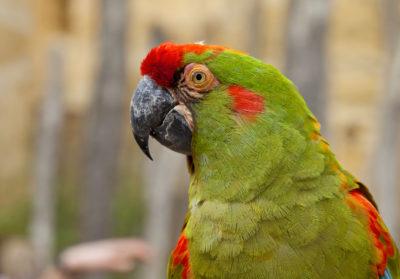 bioparc-parc-zoologique-ara-lafresnay