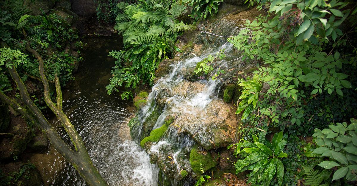 bioparc-parc-zoologique-cascade