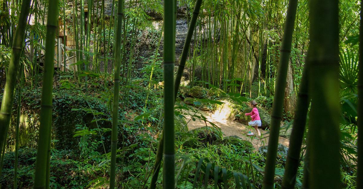 bioparc-parc-zoologique-chemin-vegetation