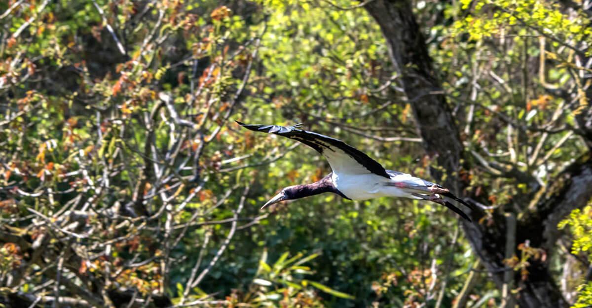bioparc-parc-zoologique-cigogne-abdim