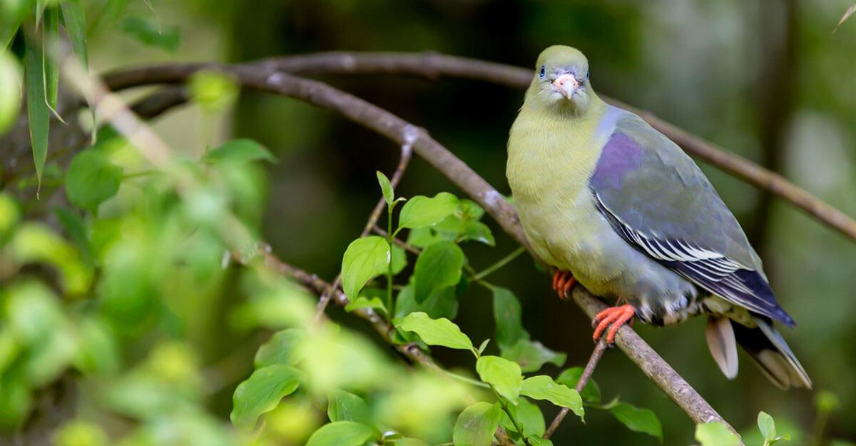 bioparc-parc-zoologique-colombar-front-nu
