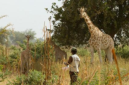bioparc-parc-zoologique-projet-nature-girafe-niger-ASGN-3