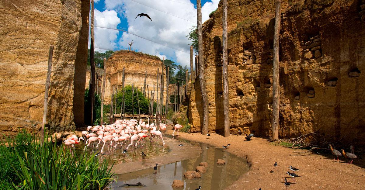 bioparc-parc-zoologique-grande-voliere-aras