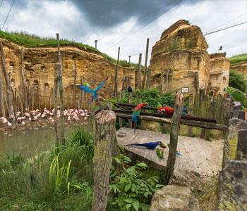 bioparc-parc-zoologique-grande-voliere-sud-americaine