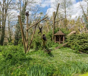 bioparc-parc-zoologique-ile-gibbons