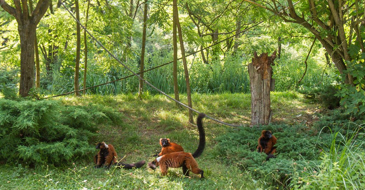 bioparc-parc-zoologique-ile-varis-roux