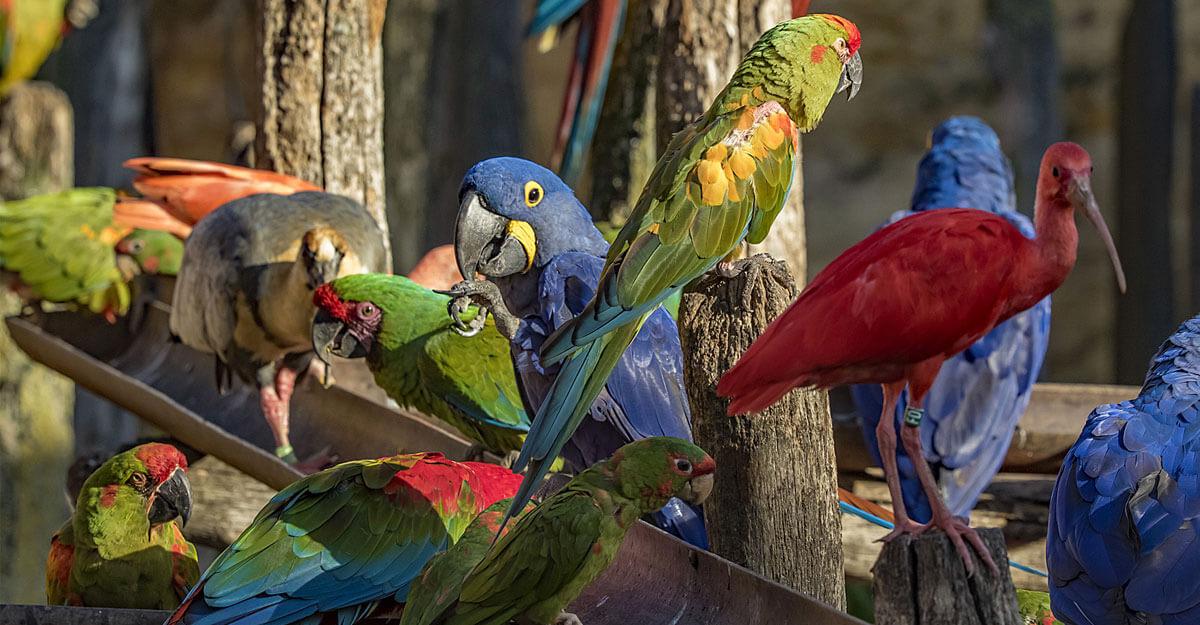 bioparc-parc-zoologique-nourrissage-perroquets