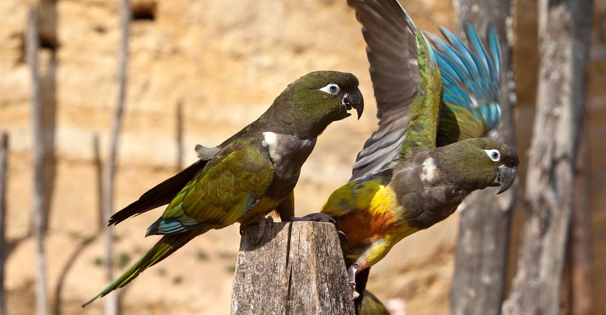bioparc-parc-zoologique-peruche-patagonie