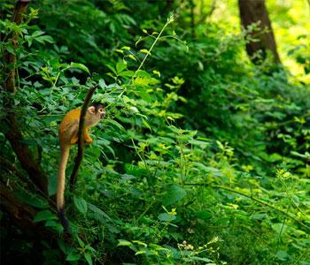 bioparc-parc-zoologique-saimiri