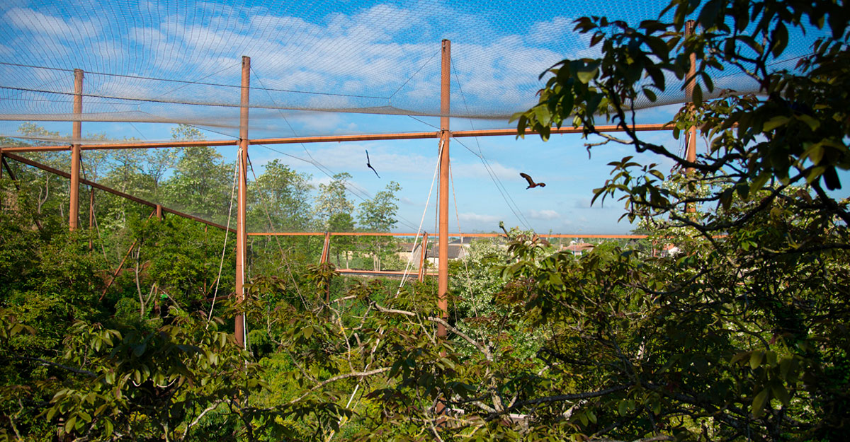bioparc-parc-zoologique-sanctuaire-des-okapis