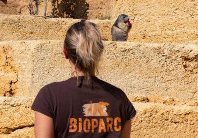 bioparc-parc-zoologique-nourrissage-marmotte