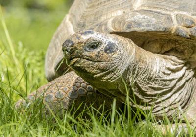 bioparc-parc-zoologique-tortue-geante-seychelles
