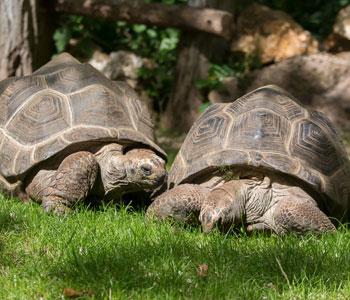 bioparc-parc-zoologique-tortues-seychelles