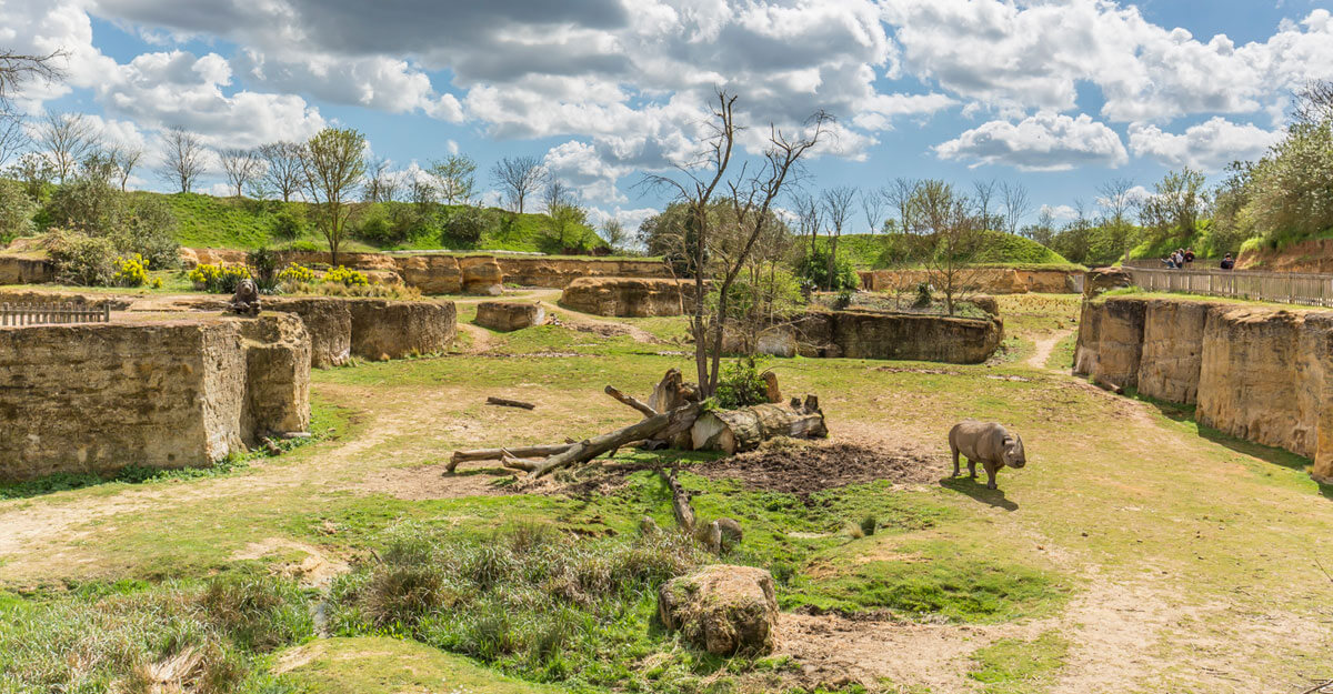 bioparc-parc-zoologique-vallee-des-rhinoceros