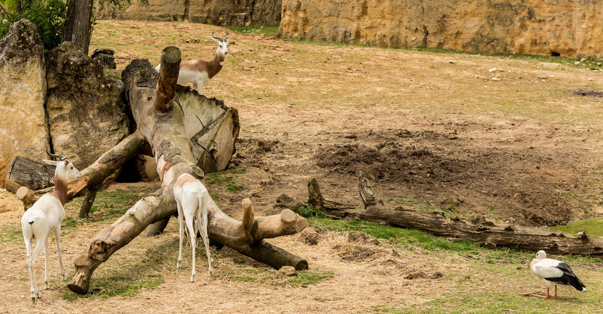 bioparc-parc-zoologique-vallee-des-rhinos