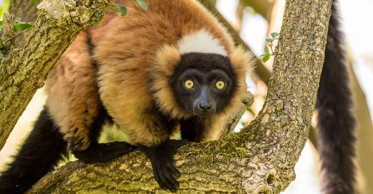 bioparc-parc-zoologique-vari-roux