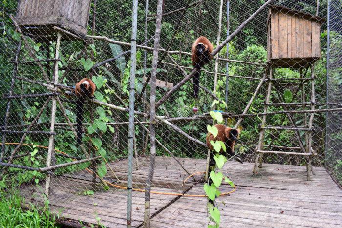 bioparc-parc-zoologique-vari-roux-madagascar