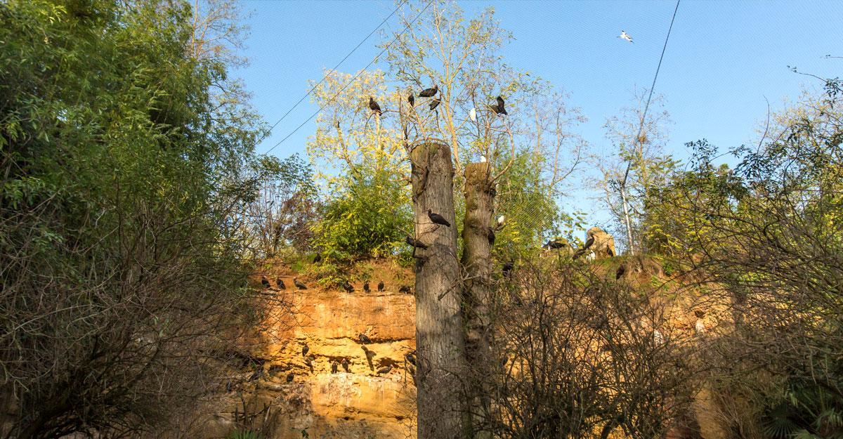 bioparc-parc-zoologique-voliere-europeenne