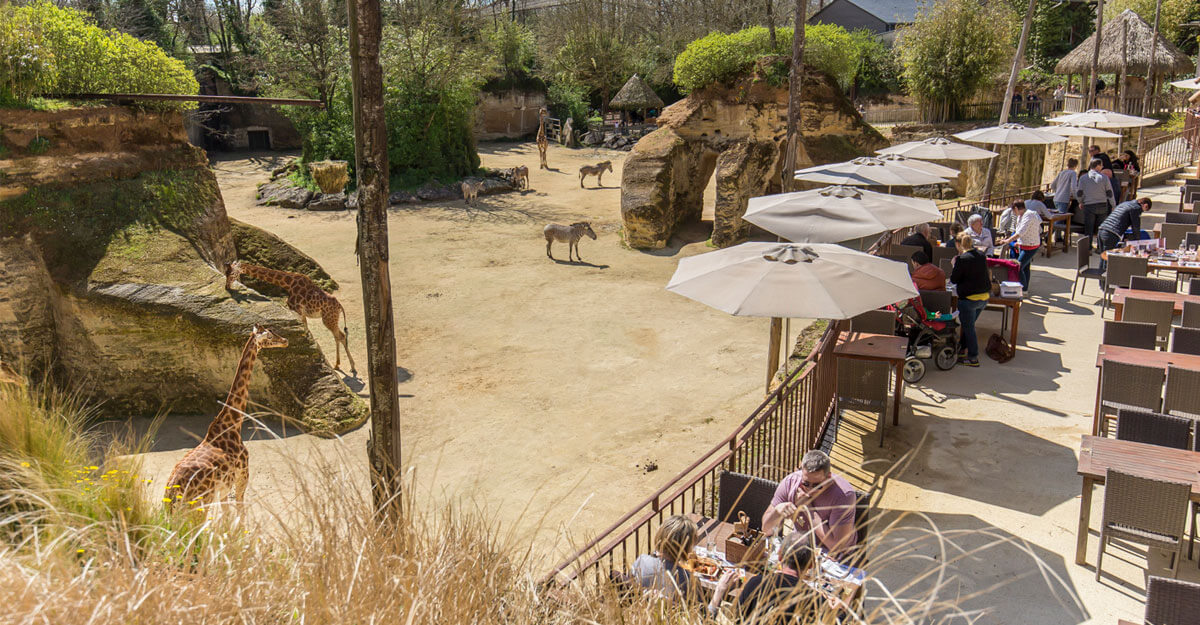 bioparc-parc-zoologique-zebre-camp-des-girafes