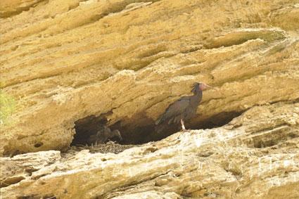 Bioparc-parc-zoologique-projet-nature-ibis-3