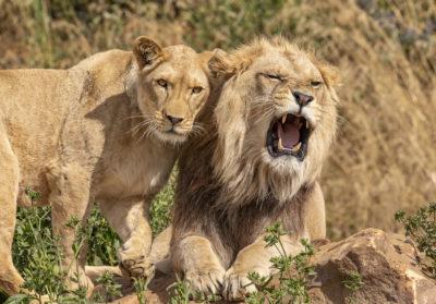 bioparc-parc-zoologique-C8-100-jours-animaux
