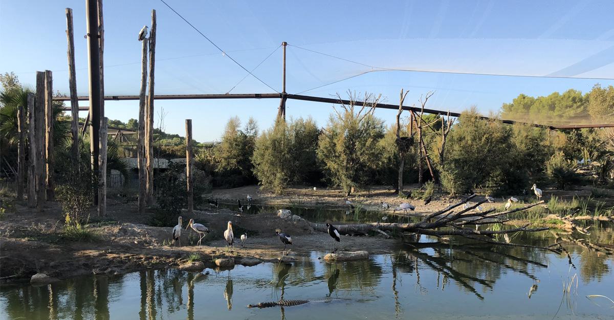 bioparc-parc-zoologique-voliere-reserve-sigean