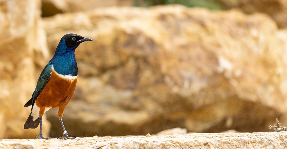 bioparc-parc-zoologique-choucador-royal