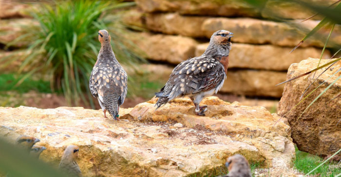 bioparc-parc-zoologique-ganga-cata