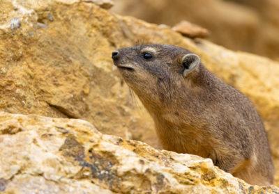 bioparc-parc-zoologique-daman-des-rochers